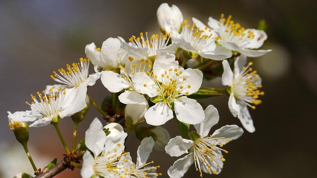 春のRacco祭り&WhiteBearZ EURJPY 3月2日12時発売